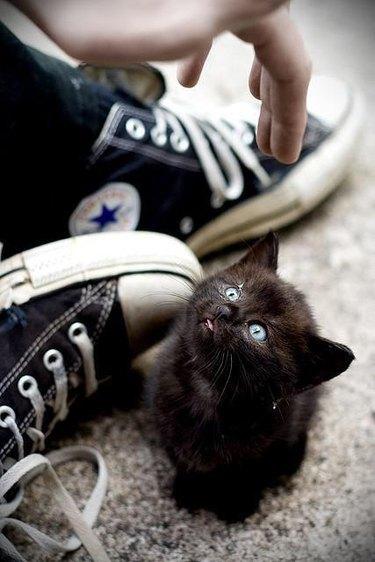 Small black kitten