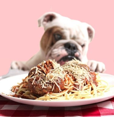 dog eating spaghetti and meatballs