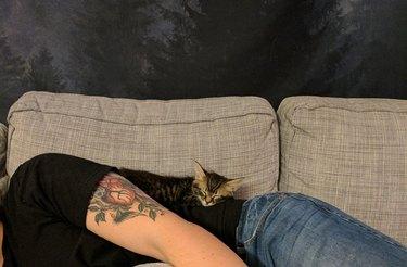 Kitten taking a nap on a bro