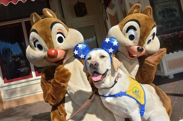 These Service Dogs Just Spent a Day at Disneyland and OMG