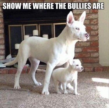 Dog with puppy. Caption: Show me where the bullies are.