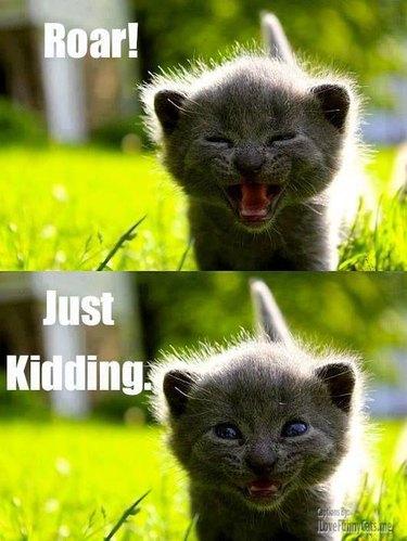 Cute kitten meme