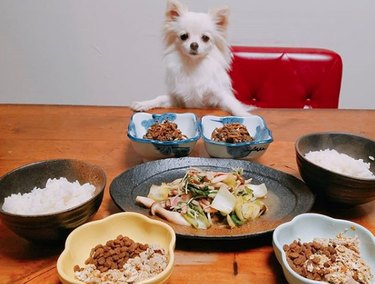 dog sitting before table with Chinese food