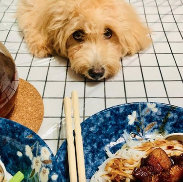 dog sitting in front of Chinese food