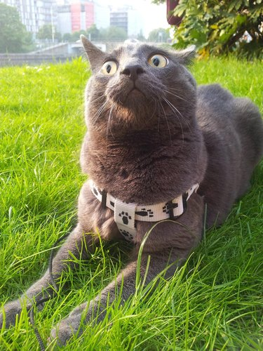 Cat in grass with wide eyes