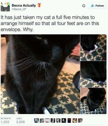 Tweet about cat sitting on envelope