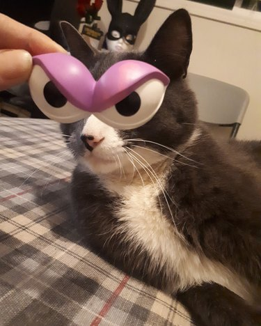 human holds cartoon eyes in front of cat