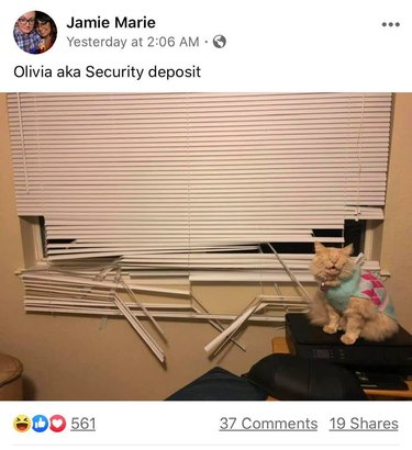 cat destroys blinds