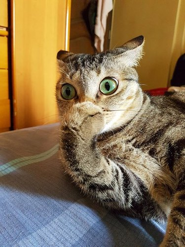 shocked cat covers mouth with paw
