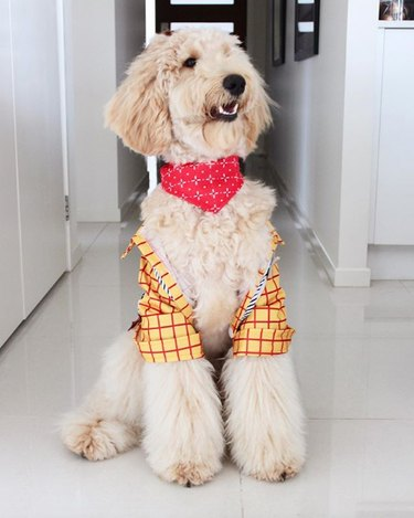 dog in checkered yellow jacket