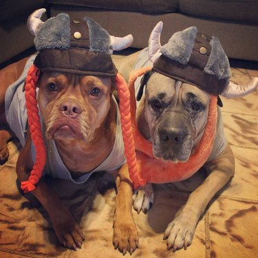 Awesome Halloween costumes for two pets