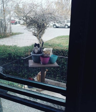 Feral cat sitting in a flower pot