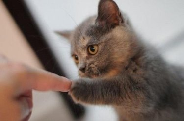 Paw and finger moment between kitten and person