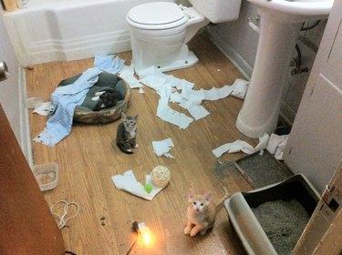 Kittens made a mess!