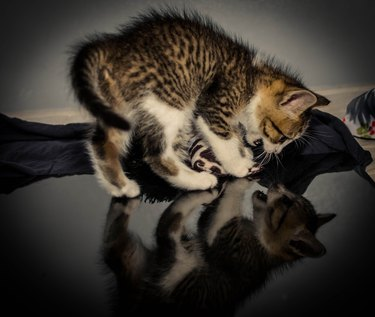 Kitten spooked by reflection