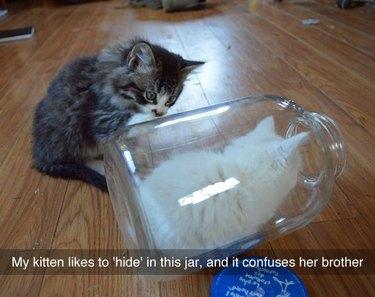Kitten hiding in a glass bottle
