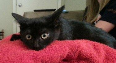 Kitten looking very surprised.