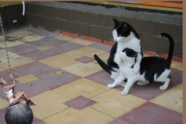Cat covering a kitten's mouth.