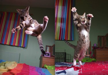 cat jumping on bed
