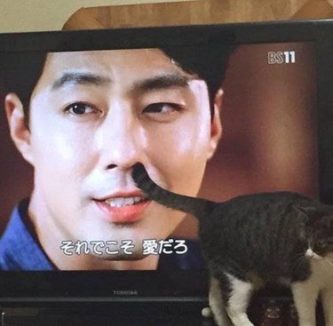Cat standing in front of a television with its tail seeming to poke into an actor's nose