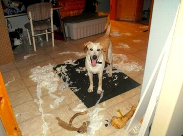 Dog surrounded by ripped toilet paper and three bones.