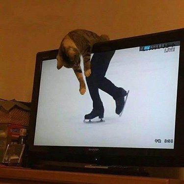Cat leaning over television screen so that it's torso is lined up with the legs of a figure skater
