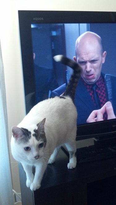 Cat standing in front of a TV screen with it's rear end pointed towards an actor making a disgusted face