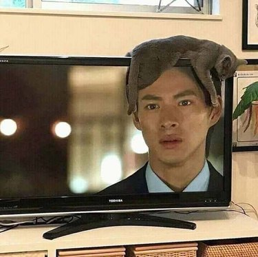 Cat lying on top of a television so that it's perfectly placed above an actor's head