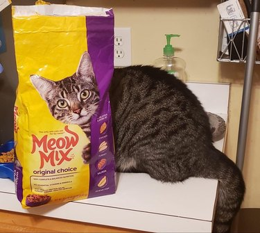 Cat sitting behind a bag of cat food with a similar face on the bag