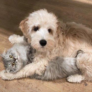 dog pinning down a cat