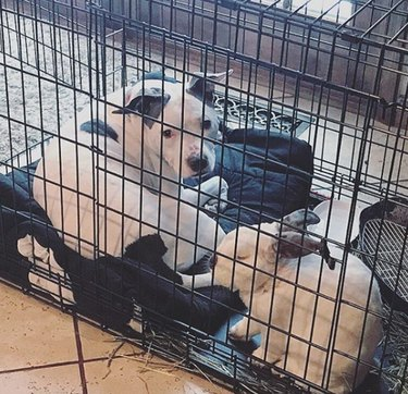 dog and bunny in a crate