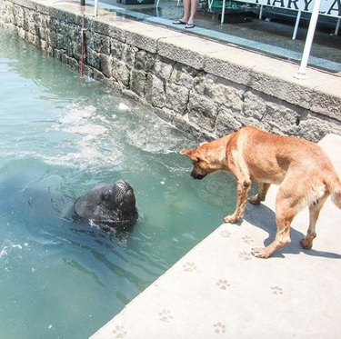 dog meeting a sea lion