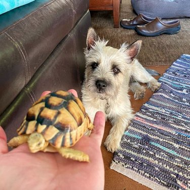 dog with a tortoise