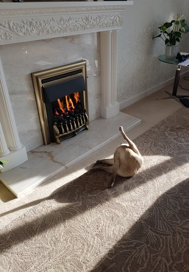 Cat licking itself in front of a fireplace