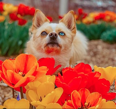 dog surrounded by orange and yellow blooms