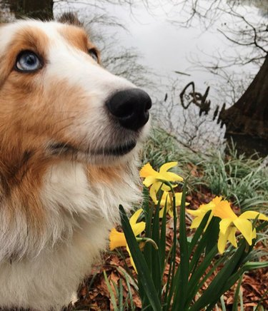 dog with yellow flowers