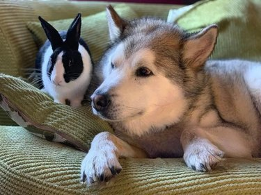 dog and bunny huddle on couch