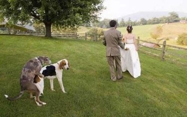 Dogs humping in wedding photo