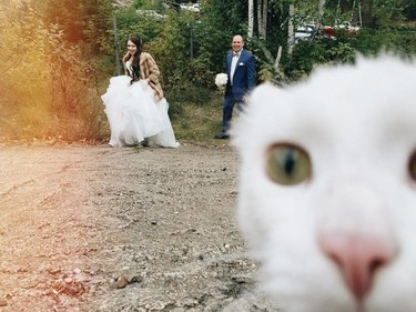 Cat photo bombing wedding pic