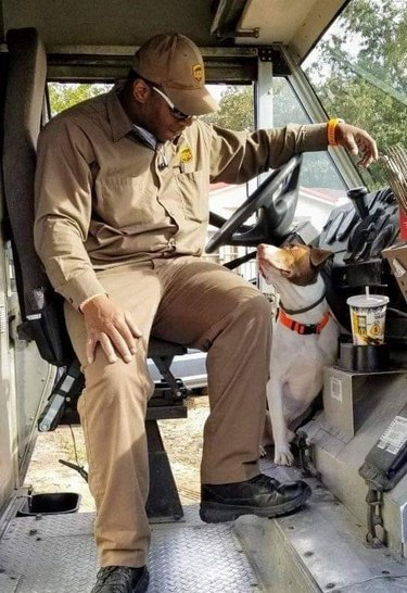 Dog and UPS driver sitting in UPS truck