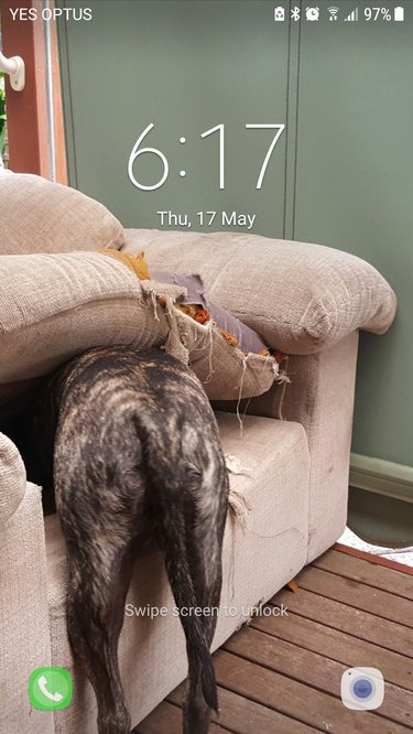 People are sharing the dog-themed wallpapers on their cell phones and it is too cute