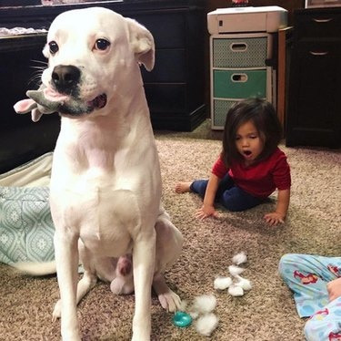 dog stealing a toy from a toddler