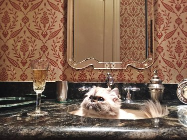 Cat in sink with a glass of champagne.