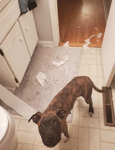 dog in the bathroom with toilet paper