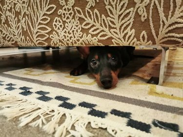 dog hiding under a bed