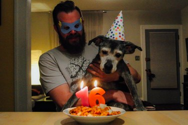 Dog on man's lap looking at lit birthday candles on plate of food