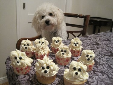 Dog posing with cupcakes decorated to look like dogs