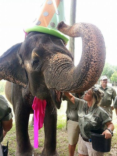 Elephant wearing a party hat