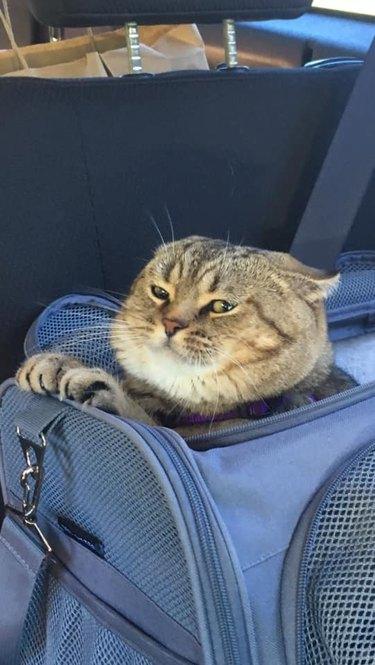 cat smells odor
