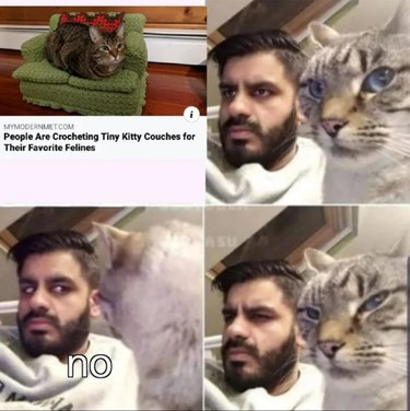 cat tells owner not to bother